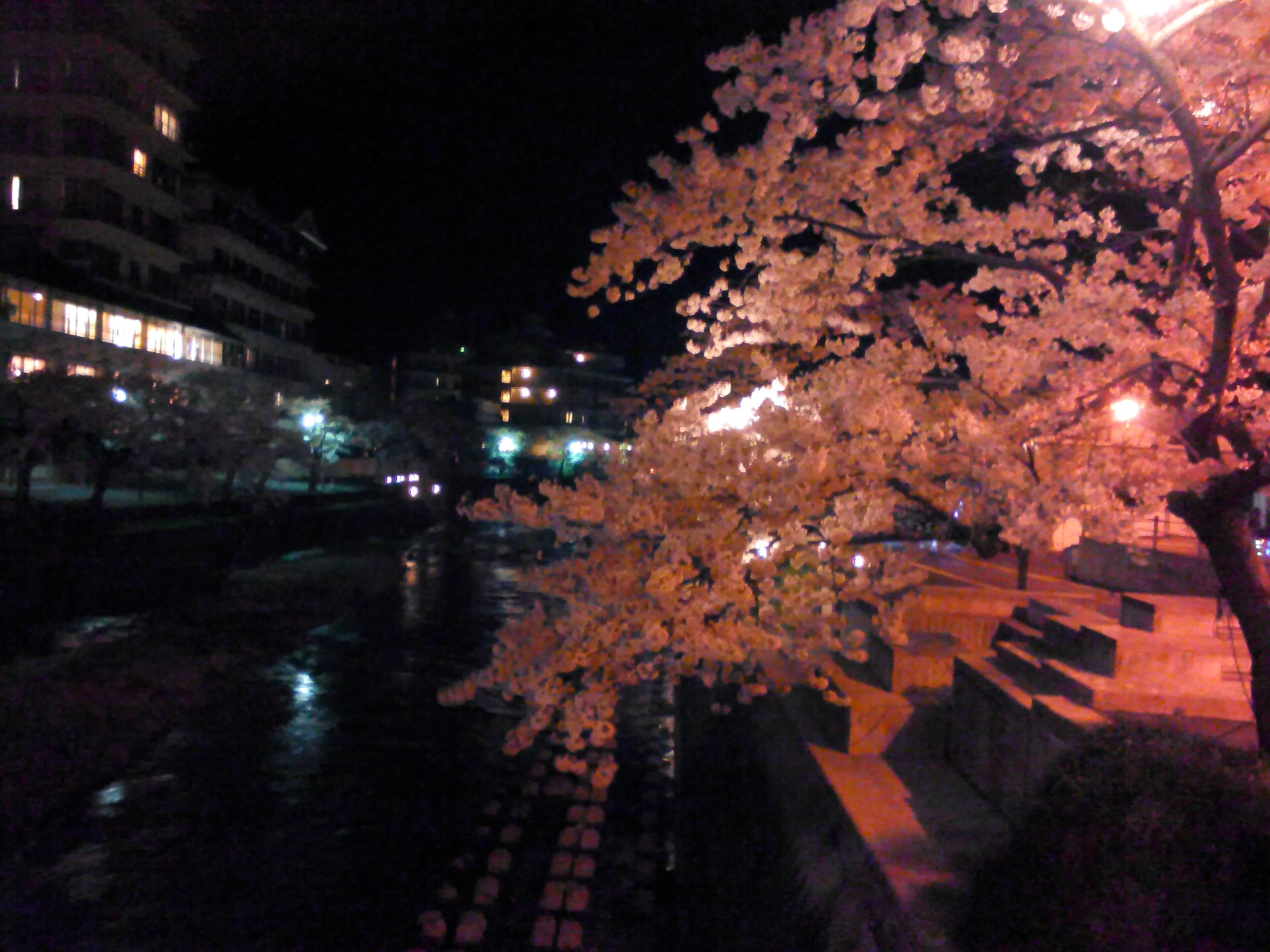 さくら 夜桜③